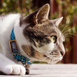 tracker gps pour animaux